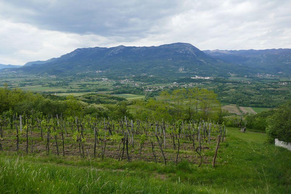 vinohrady jsou všude - foto Peter Butler
